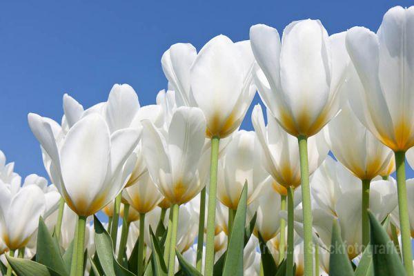 bloemen-0231D17182-EF42-0BC0-0283-2C7F3CCEBE46.jpg