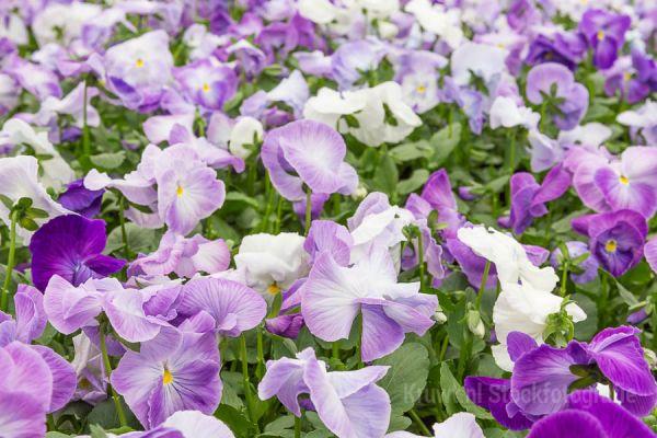 bloemen-1101EDAE40-F583-B92B-2CA2-7AB9A8737DD4.jpg