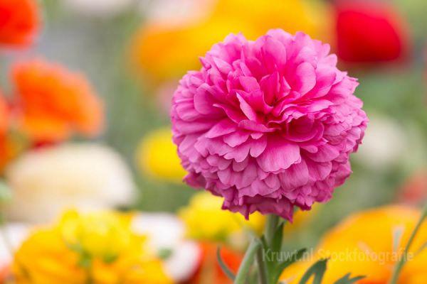 bloemen-13C2C7CC10-EED9-DB0F-CB93-D4248EF92040.jpg