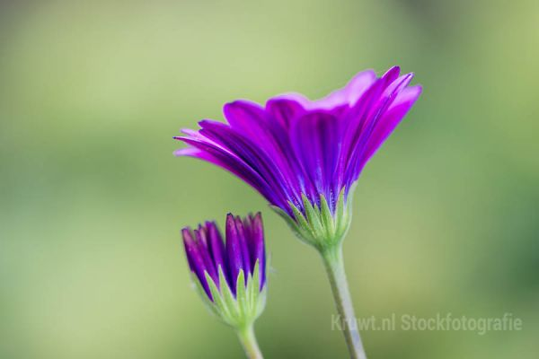 bloemen-181C44AC2A-AFA1-97C8-D2B5-E9289A9F8CF7.jpg